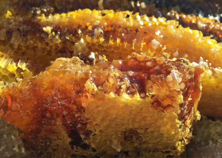 Psychedelic Mad Honey the Sweetest Way to Get High
