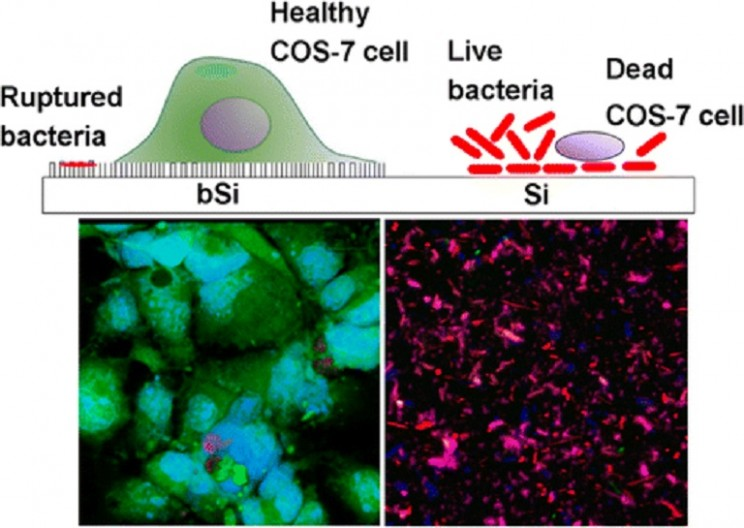 New Nanomaterial Destroys Bacteria