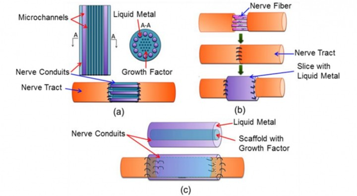 Liquid metal used Terminator-style to fix severed nerves