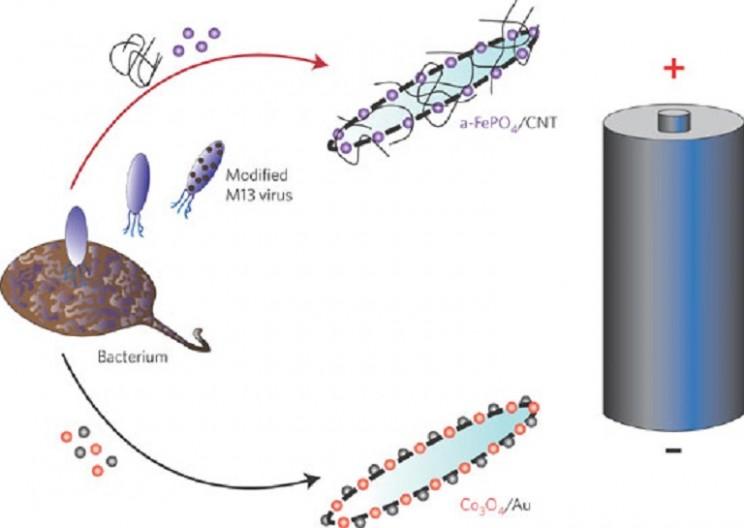 MIT Creates Battery from Genetically Engineered Virus