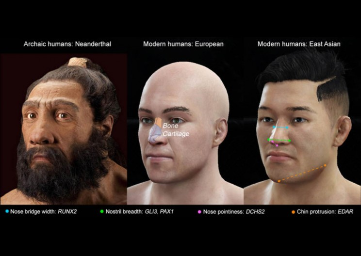 Nose-Shaping Genes in Humans Just Discovered
