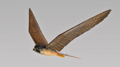 Robotic Robird bird deterrent looks and acts like a real bird