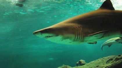 Engineers Use Sonar System to Detect Sharks