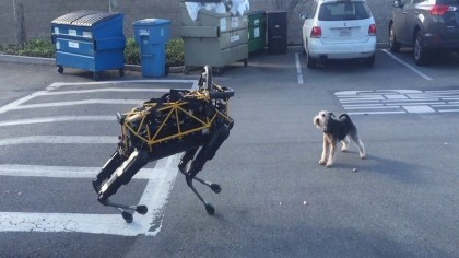 Clash of the dogs - Spot the robot dog vs Fido the real dog
