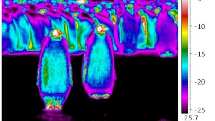 Why Don't Penguins' Feet Freeze?: A Remarkable Evolutionary Adaptation