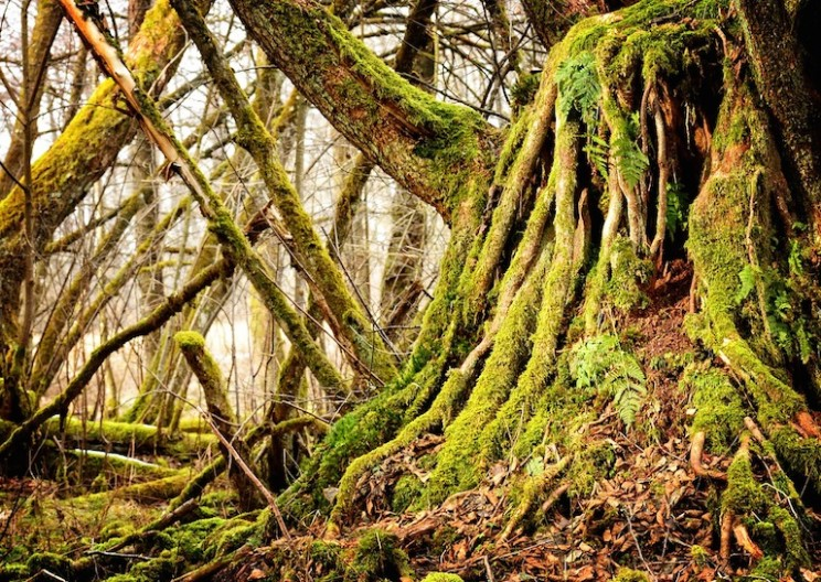 Researcher Discovers That Trees Talk to Each Other, Literally!