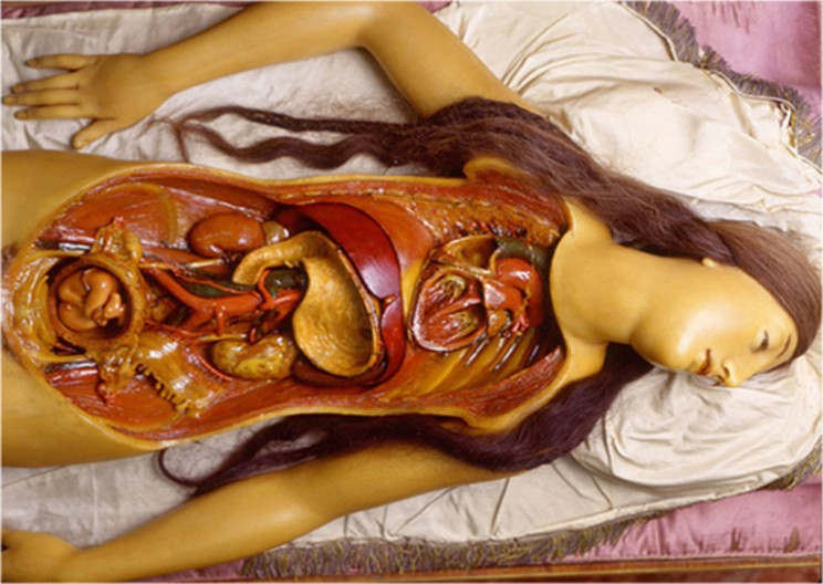 Anatomical Venuses: Beauty Literally Dissected
