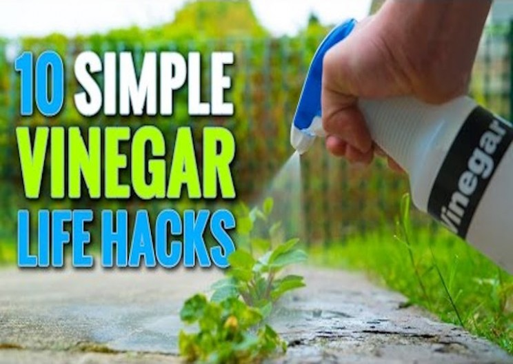 10 Most Useful Vinegar Hacks for Around the House