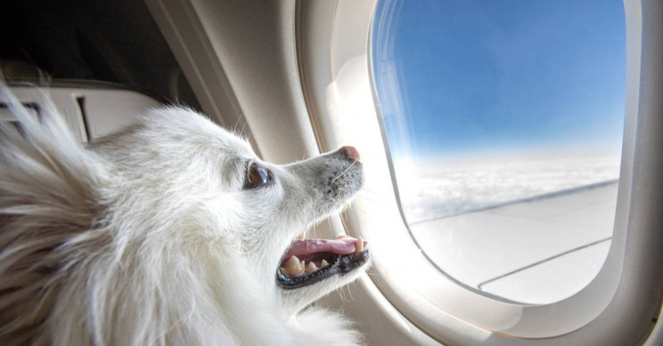 How to Fly Safely With Your Pet