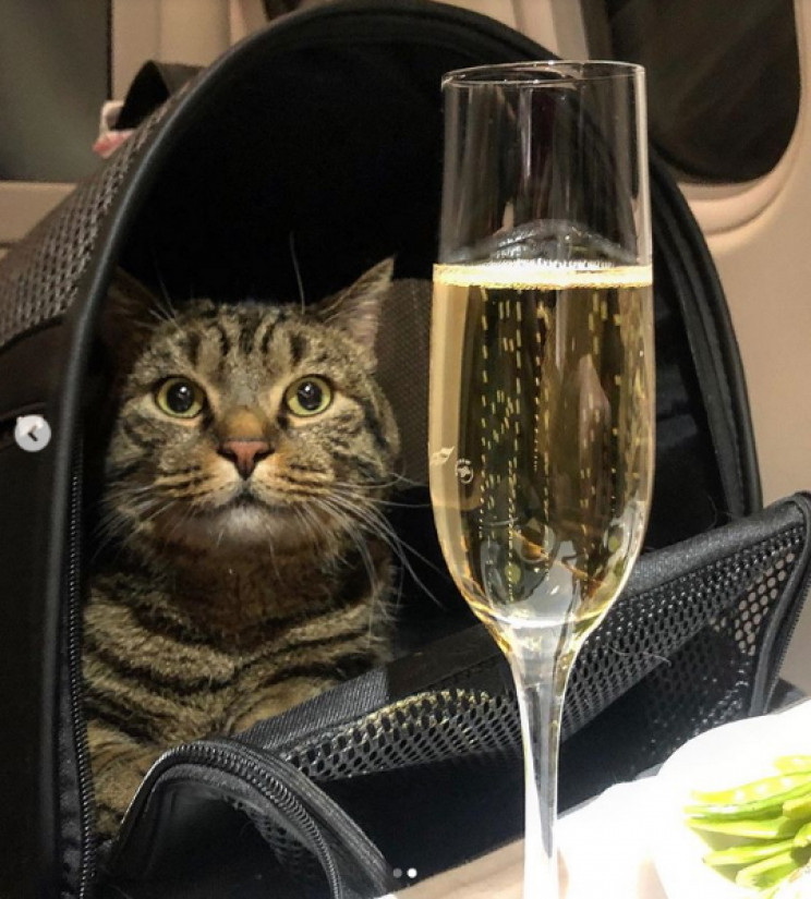 Viktor in his carrier with Champagne