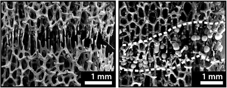 A Bone-like Metal Foam Is Showing Wolverine-like Healing Properties