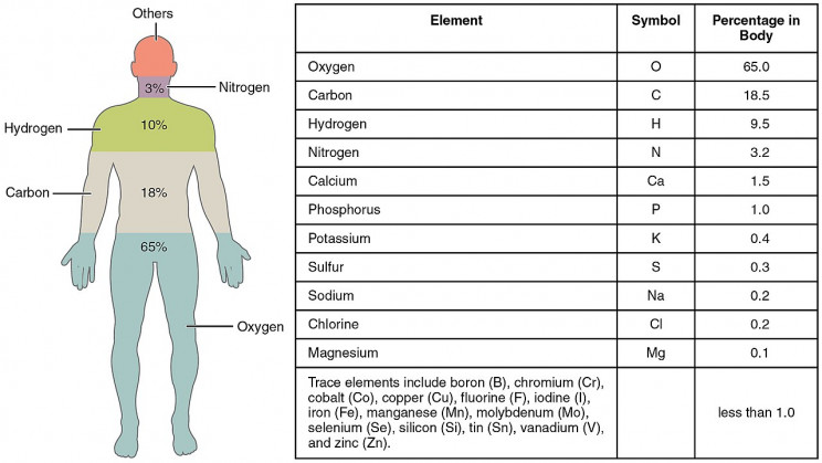 Elements that Make Up Human Body