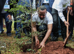 Ethiopia Plants 350 Million Trees in 12 Hours, Breaking Tree-Planting Record