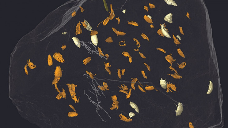 Digging Through Poop, Scientists Discover 230-Million-Year-Old Beetle Species