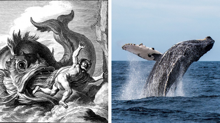 Jonah's Parable Come True: Diver Gulped Down by Humpback Whale Survives
