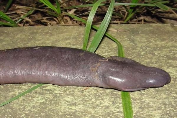 7 Animals That Look Exactly Like Dong