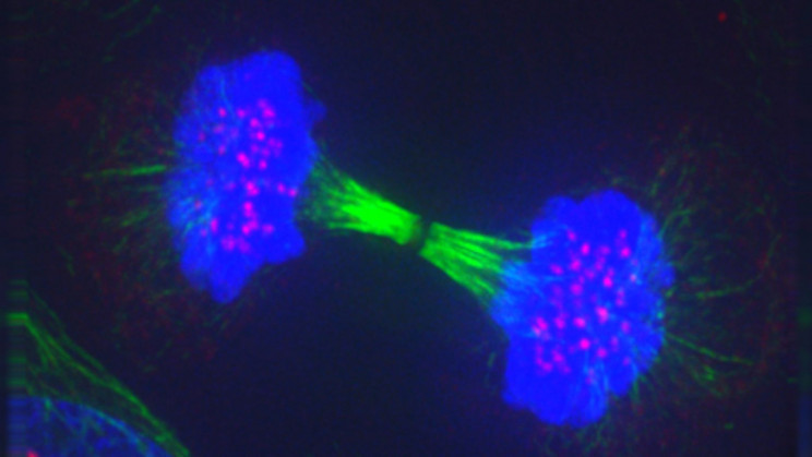 Novel Artificial Cell-Like Structures Can Mimic Natural Living Cells