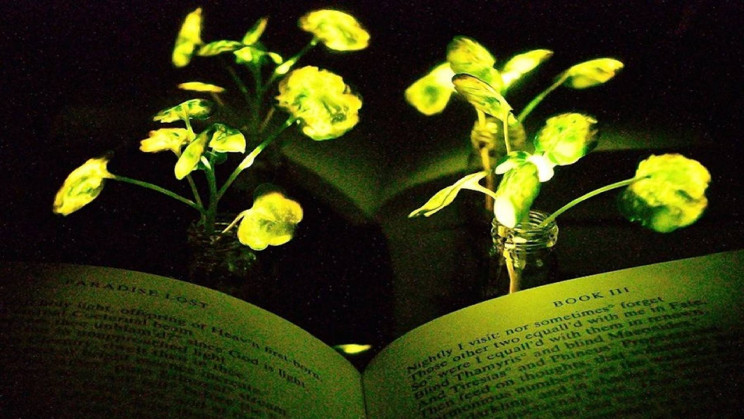 MIT Wants to Replace Lights With Glowing Plants