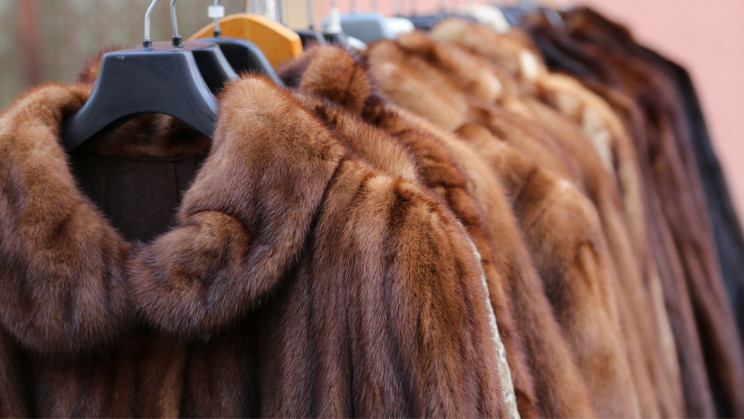 Israel Makes History, Becomes First Country to Ban Fur