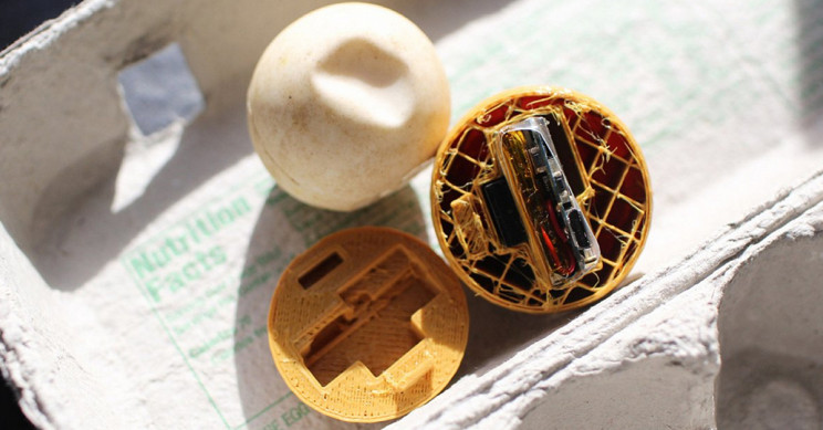GPS-Implanted Fake Eggs Might Save Sea Turtles from Illegal Poaching