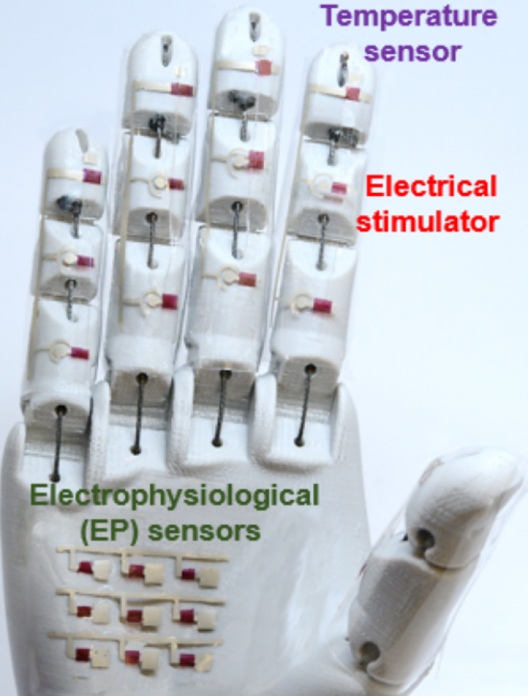 Rubbery Semiconductor Could Allow Doctors to Practice Remotely