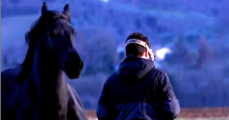 This Oblivious Drone Operator Got Body-Slammed By A Horse