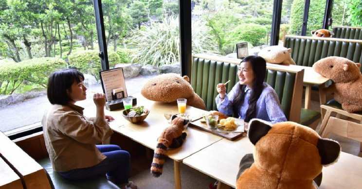 Toy Capybaras Are Now Being Used as Social Distancing Tools in a Japanese Zoo