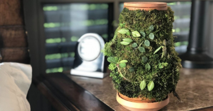 This Designer Came Up With a Self-Watering, No-Soil Planter