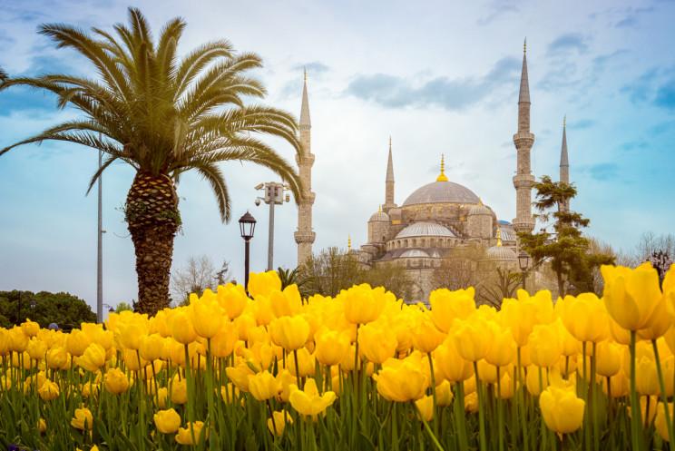 tulips in turkey