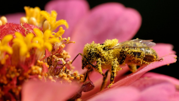Caffeinated Worker Bees Are Better Worker Bees, Study Finds