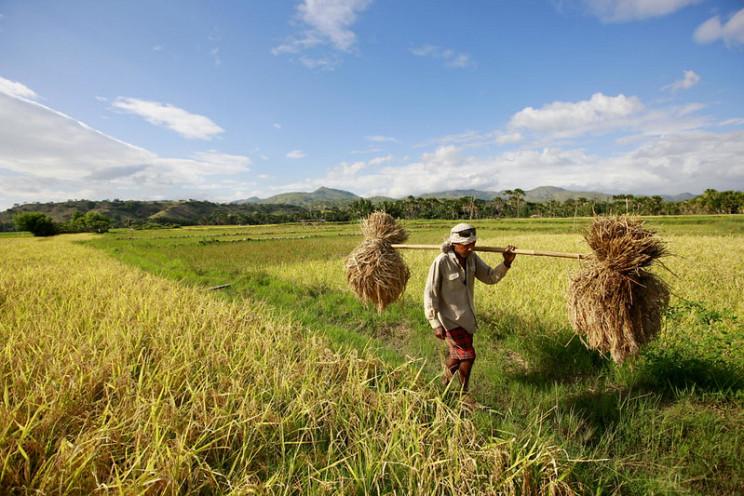 invasive species crops