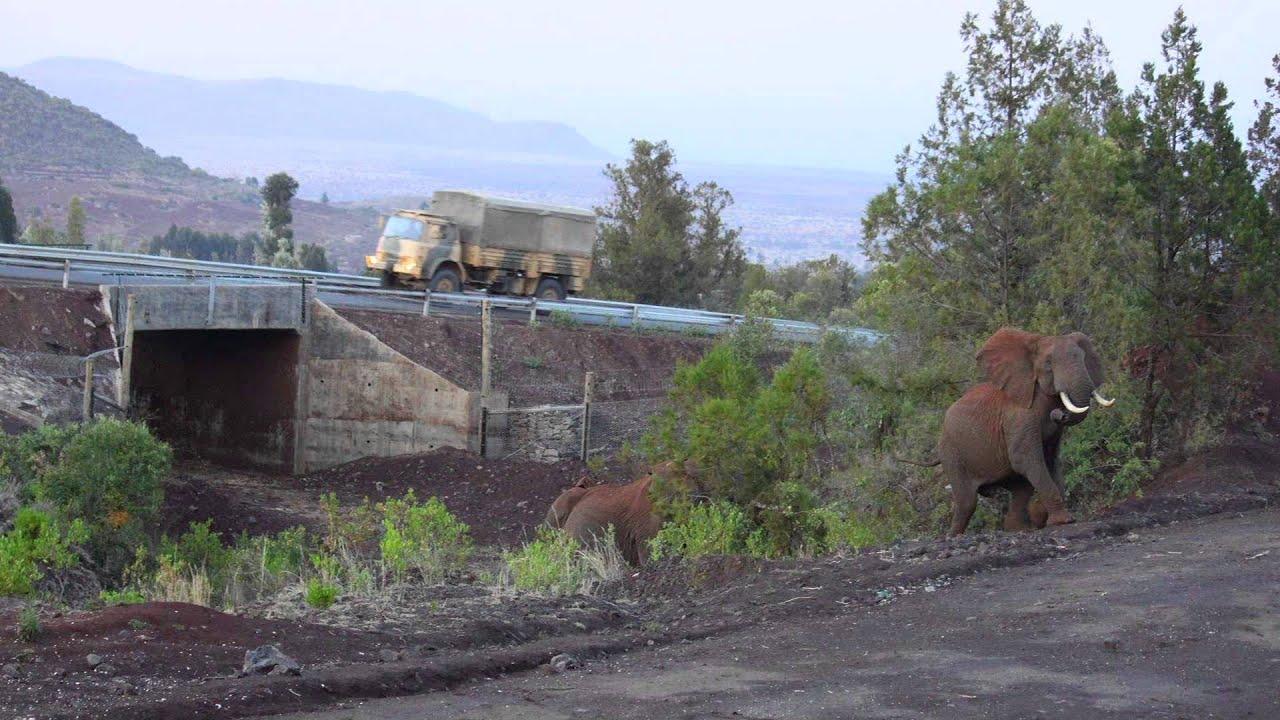 wildlife crossings kenya