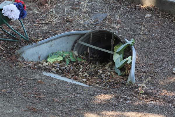 wildlife crossings toads 1