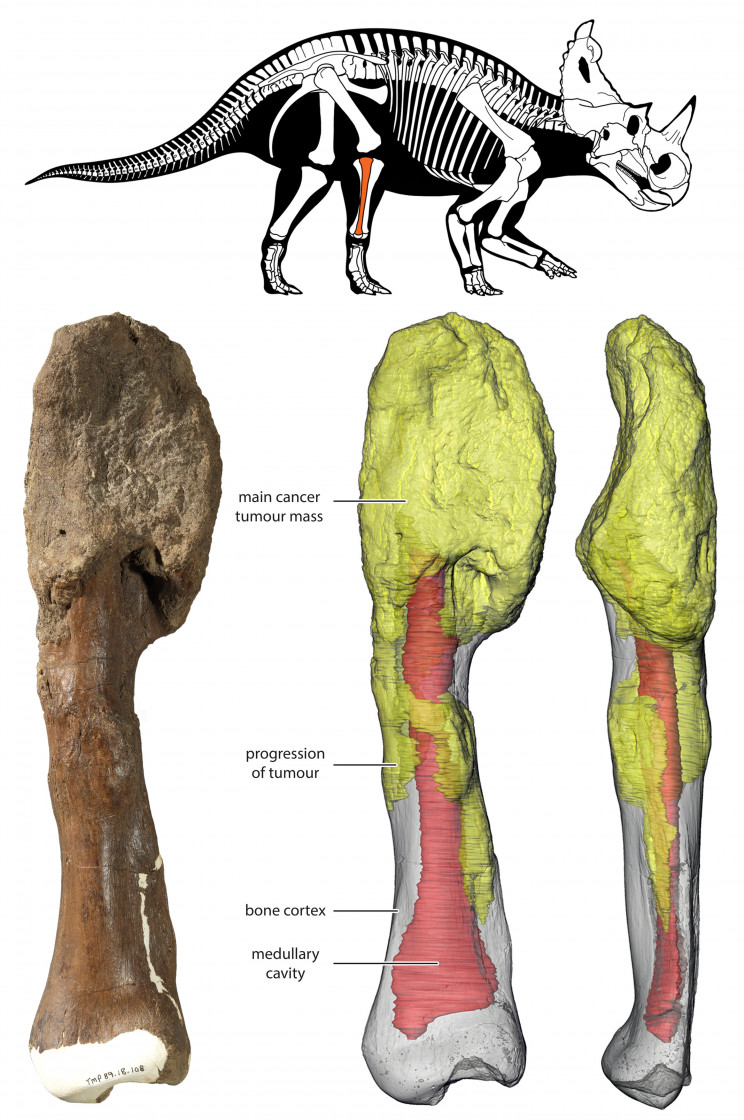 Scientists Have Diagnosed a Dinosaur With Malignant Cancer In Historic First