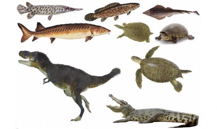 Other species found at Rainbows