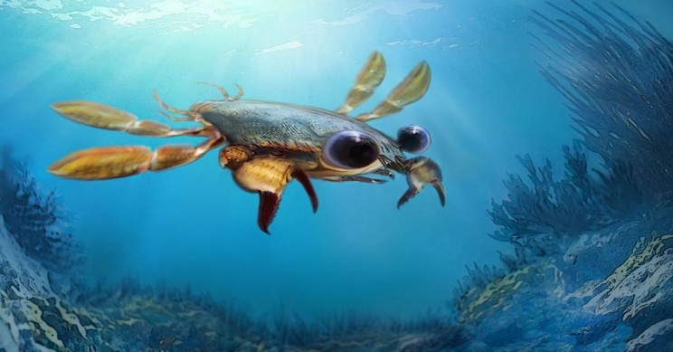 This Cartoonish Newly Discovered Crab Looks like a Rejected Disney Character