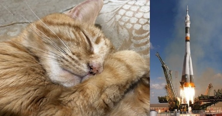 The Passionate Cat Owner Wants to Send His Deceased Pet Into Space