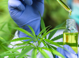Cannabis Might Block COVID-19 Infection, Study Shows