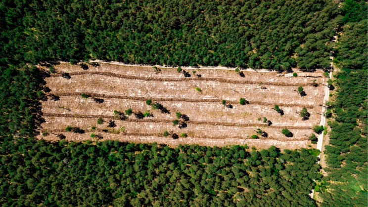 Deforestation and Palm Oil Plantations Could Trigger the Next Pandemic