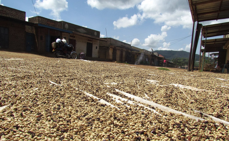 Colombian Coffee Is Now Used to Build Houses