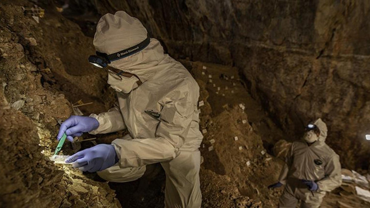 Scientists Reconstruct Stone Age Bear Genome From Cave Soil Samples