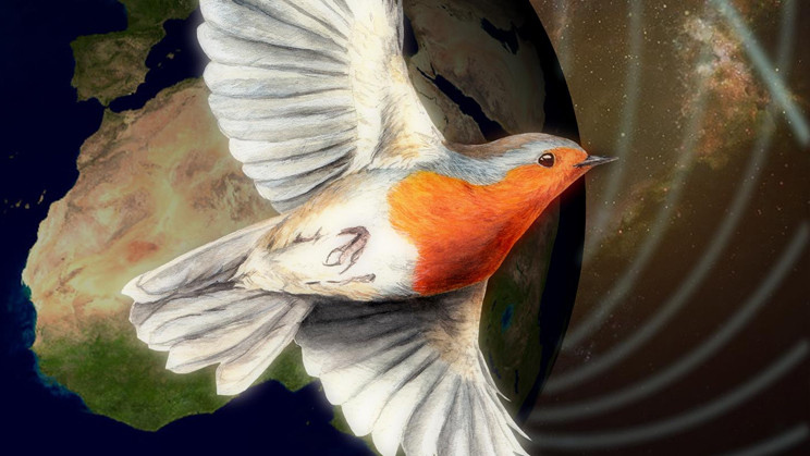 """Birds See Magnetic Fields Thanks to a """"Quantum Compass"""""""