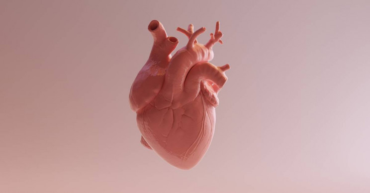 Scientists Discover New Cell That Can Heal Hearts