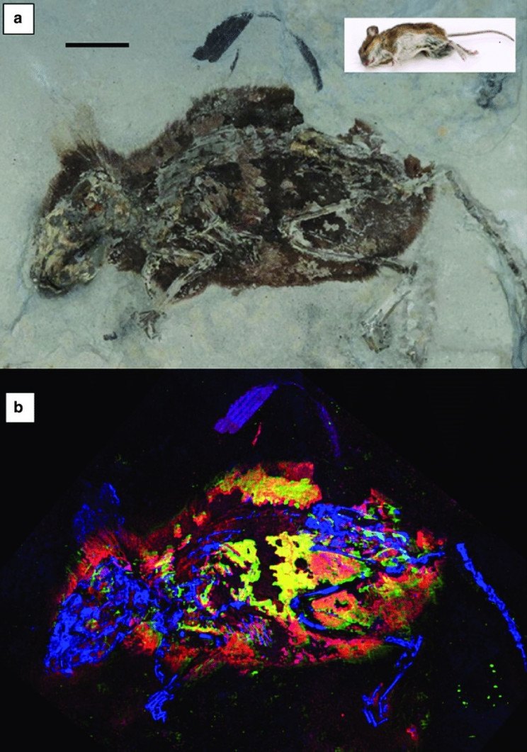 reconstructing the dead mice