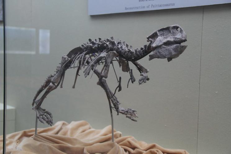 flesh on the bones Psittacosaurus