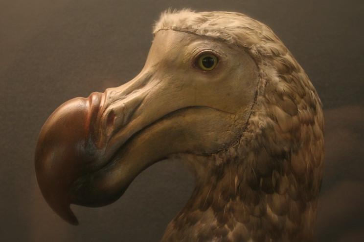 restore the dodo