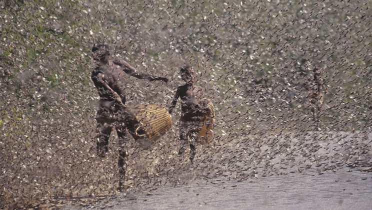 Startup Turns Destructive Locust Plagues Into Animal Feed and Fertilizer