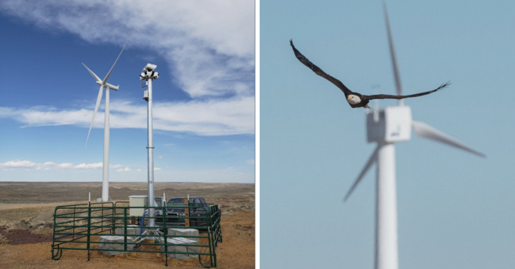 Smart Camera System Saves Eagles from Wind Turbine Deaths