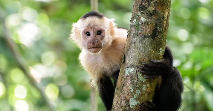 Monkeys Playing Video Games Experience 'Sunk Costs' Just Like Humans