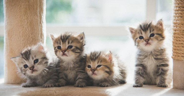 Beijing Biotech Company Makes Consumer Cat Cloning a Real Thing